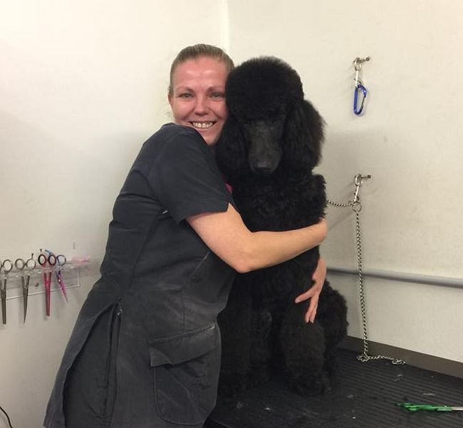 Groomer Judy with her handsome poodle friend